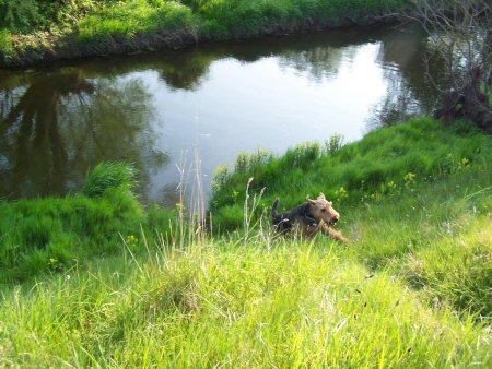 River Dog 3
