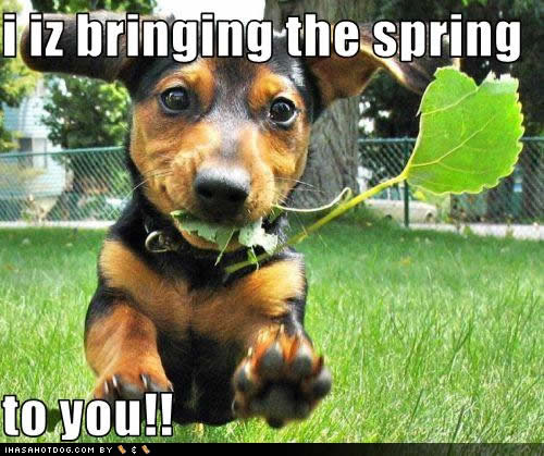 funny-dog-pictures-bringing-spring