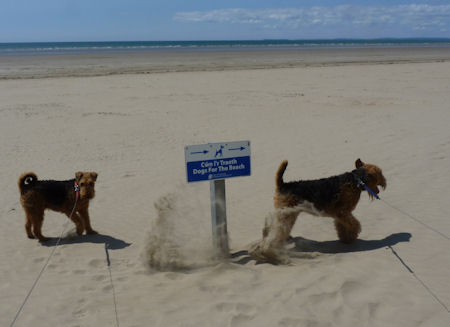 DogsForTheBeach2